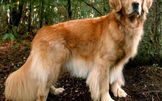 10 пород собак, которые обожают детей и никогда не навредят им