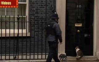 Долой собак: главный мышелов Англии возмущён