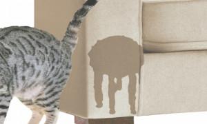 Кот метит территорию: как отучить усатого от вредной привычки
