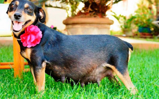 Сколько длится беременность у собак: Основные признаки и сроки