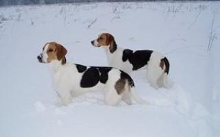 Чем лучше утеплить будку для собаки