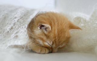 На какой день котята открывают глаза