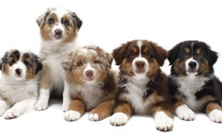 Клички для собак мальчиков: как выбрать?