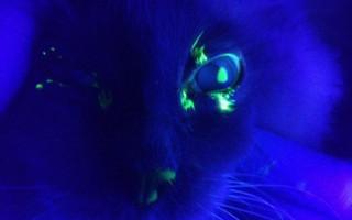 Ринотрахеит у кошек: симптомы и лечение в домашних условиях