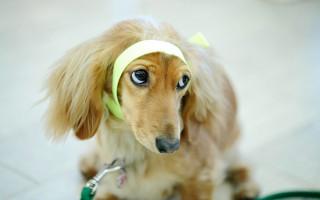 5 ситуаций, когда стоит обратиться к ветеринару даже, если собака с виду здорова