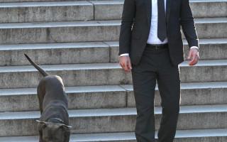 Порода собаки из фильма «Джон Уик 2»: фото и описание
