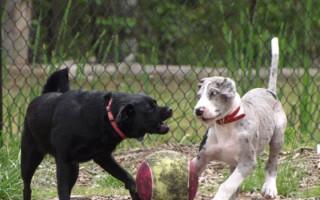 Как отучить собаку лаять на других собак: 10 советов и рекомендаций