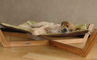 Как выбрать лежак для собаки
