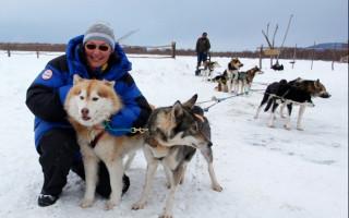 Хаски (фото): свободолюбивая и независимая ездовая собака