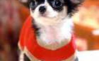 Учёные доказали, что собаки заставляют своих владельцев больше двигаться