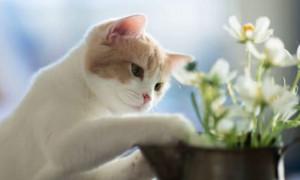 Почему кошка ест землю; 5 возможных причин и способы их устранения