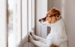 Приучение щенка к чистоте в доме