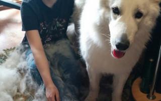 Правильный уход за шерстью собаки: чем расчесывать и как вычесать колтуны