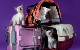 Как выбрать переноску для кошки или собаки? Переноски для кошек