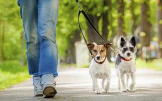 Закон о выгуле собак в 2020 году: правила и штрафы в России