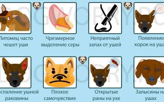 Почему собака чешет уши и трясёт головой