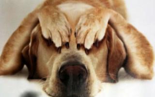 Как избавиться от запаха собаки