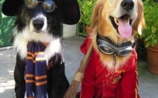 Костюм для собаки на Хэллоуин своими руками — идеи на фото