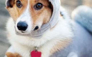 4 причины, по которым не стоит называть собаку человеческим именем