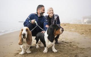 Поводок для выгула двух собак