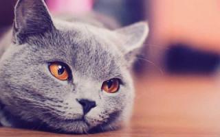 Нефроз у кошек