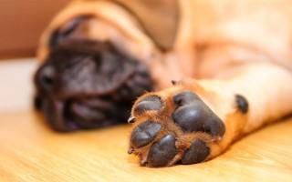 Зачем собаке нужен пятый палец