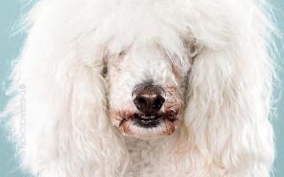 Зачем собакам грумер
