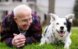 Ушла из жизни Чейзер — самая умная в мире собака