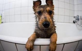 4 ошибки, которые делают хозяева собак при мытье лап после прогулки