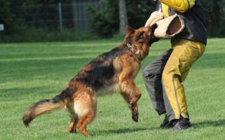 Поведение собак, тестирование и коррекция поведения