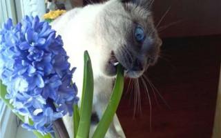 Ядовитые растения для кошек: как помочь при отравлении