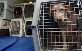 9 секретов от опытных путешественников, которые перевозили собаку в самолете