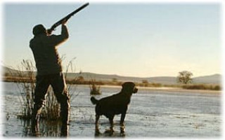 Охотничьи породы собак: фото с названиями