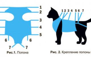 Уход за кошкой после стерилизации по дням: шов, что можно, что нельзя