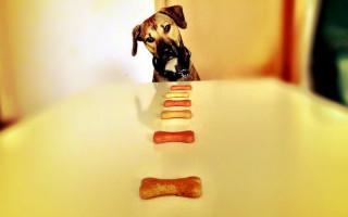 Как отучить собаку быстро есть — лучшие способы