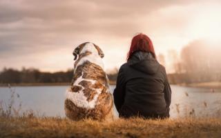 Пекинес (фото): добрая, преданная и гордая собака для любящих хозяев